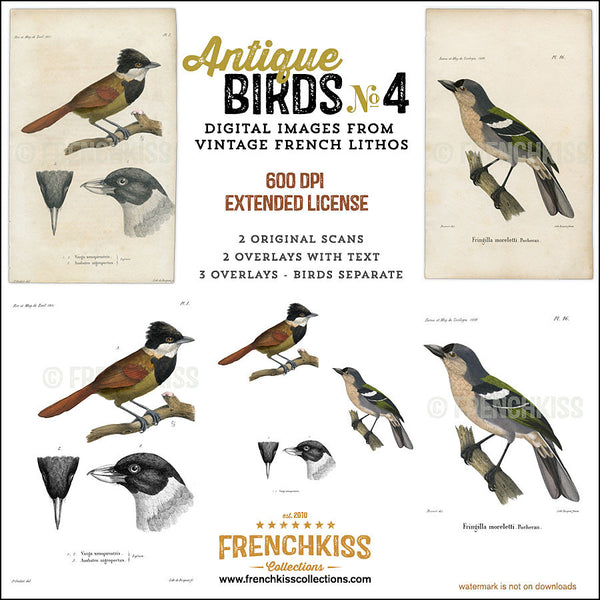 2 illustrations digital downloads from original vintage French bird lithographs dated 1850 and 1858 all..