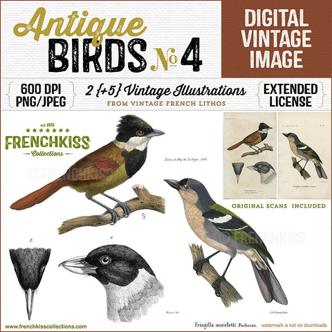2 illustrations digital downloads from original vintage French bird lithographs dated 1850 and 1858.