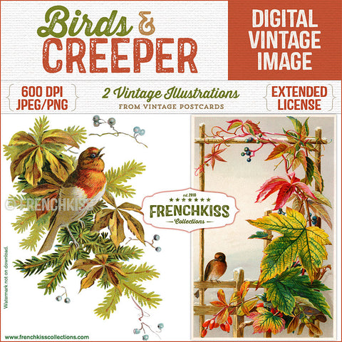 Bird illustration digital downloads from vintage postcards with Boston Creeper leaves turning color. French Kiss Collections