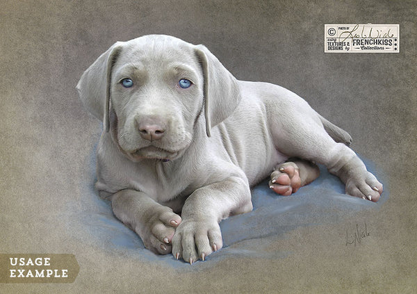 Example of a puppy photo using the French Kiss Classique texture collection.
