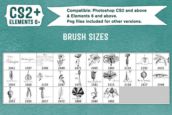 Cahier de Botanique vintage French Photoshop brush sizes.