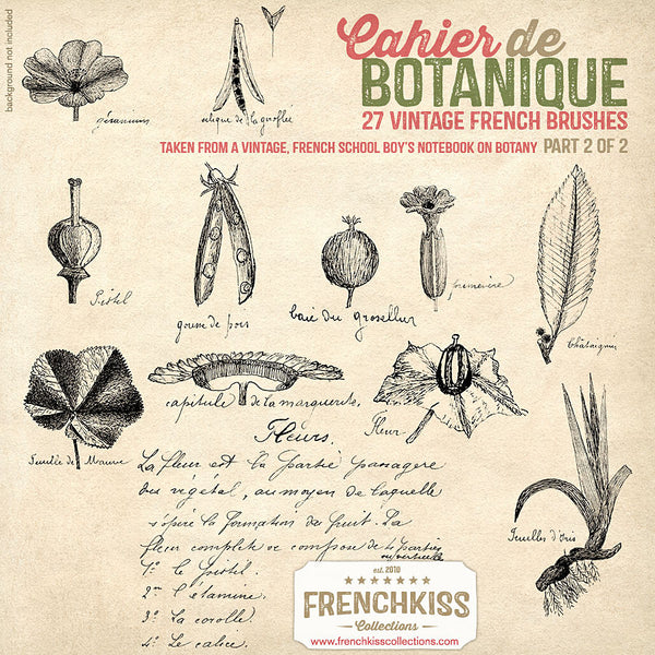Cahier de Botanique vintage French Photoshop brushes part 2