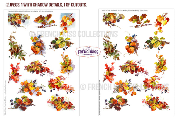 Fall Leaves and Berries Vintage illustrations printables.