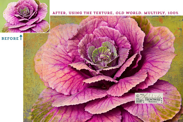 Photograph of ornamental cabbage using a painted texture from the Impasto Improv No. 1 collection.