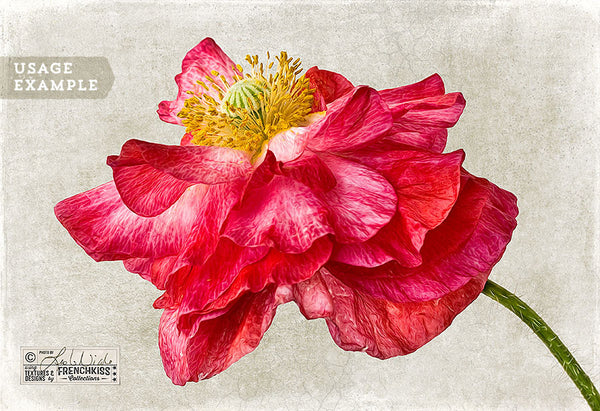 Flower photograph using the Craquelure fine art texture collection.