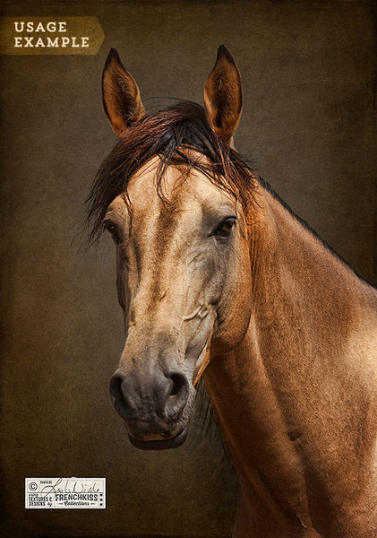 Example of a horse portrait using the French Kiss Classique texture collection.