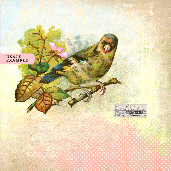 Usage example using Vintage Birds No. 6 digital illustration graphics.