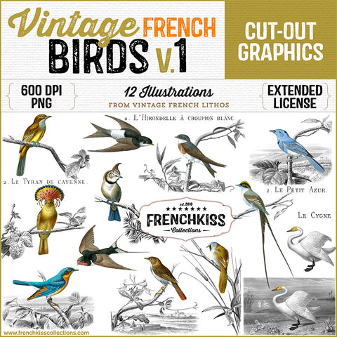 12 Magnificent Bird Illustration From The Late 1800s Commercial Use Graphics Vintage French