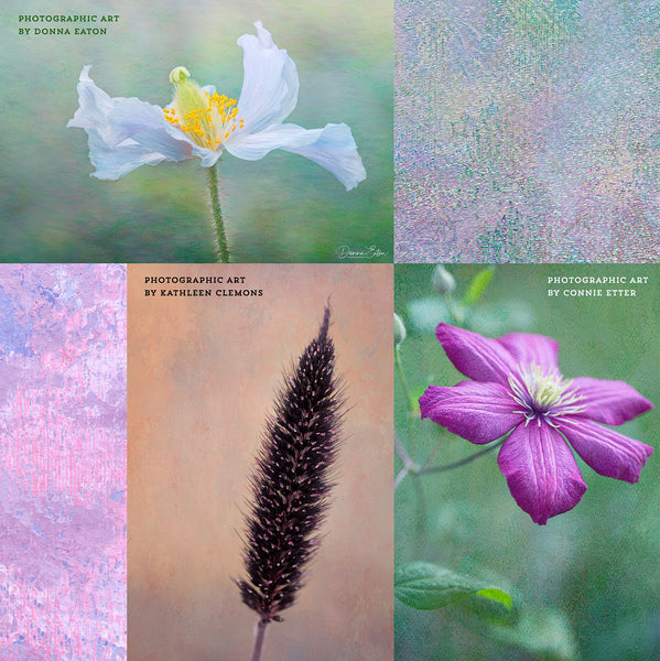 Floral photography examples using the Virtuoso Painterly texture collection.