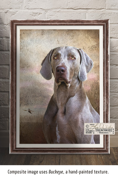 Portrait of Weimaraner by Leslie Nicole using a texture from the Atelier Hand-Painted Texture Collection.