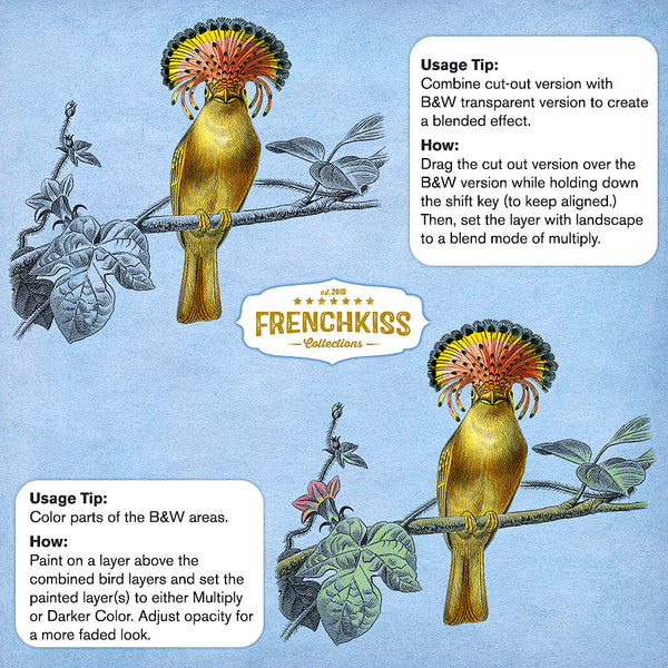 Usge tips for the Antique Birds No. 1 digital downloads at French Kiss Collections.