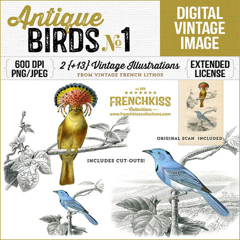 Antique Birds No. 1 Lithography illustrations digital downloads at French Kiss collections.
