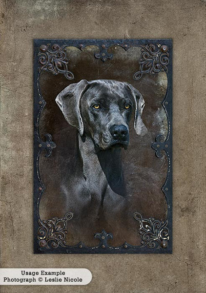 Portrait of a Weimaraner using the digital Vintage Grunge Frames.