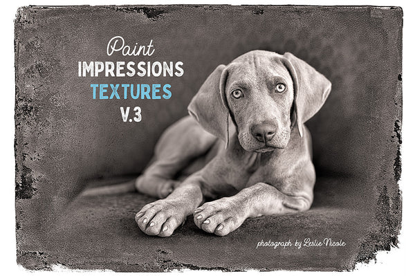 Photograph of a Weimaraner puppy with a texture from the Paint Impressions V.3 collection.