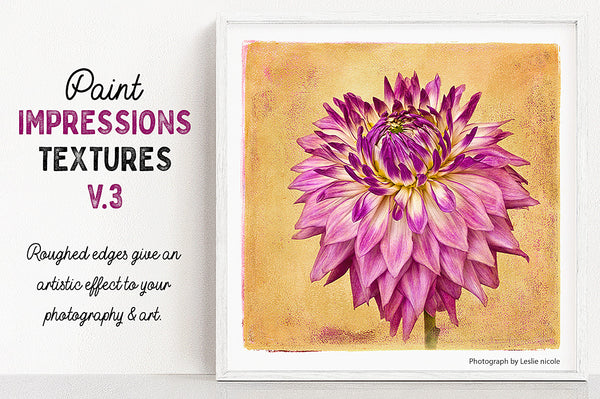 Dahlia flower photograph that uses a texture from the Paint Impressions V.3 collection.