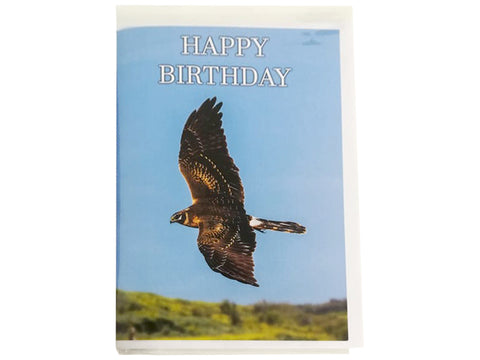 Birthday Card Collection - No. 11 Pallid Harrier