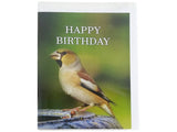 Birthday Card Collection - No11. Hawfinch