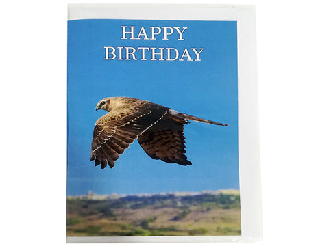 Birthday Card Collection - No. 13 Montagu's Harrier