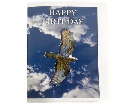 Birthday Card Collection - No. 16 European Honey Buzzard