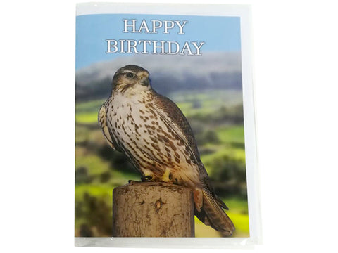 Birthday Card Collection - No. 26 Saker Falcon