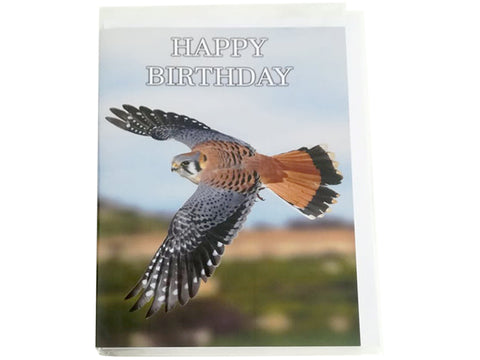 Birthday Card Collection - No. 33 American Kestrel
