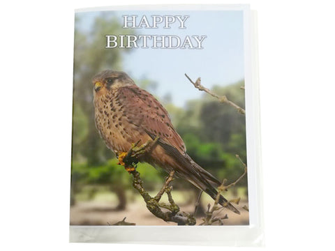 Birthday Card Collection - No. 35 Eurasian Kestrel