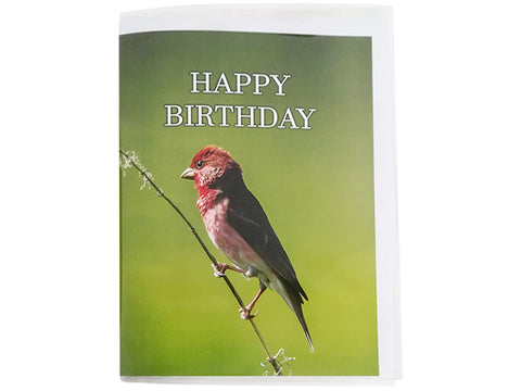 Birthday Card Collection - No4. Common Rosefinch