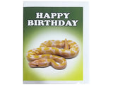 Birthday Card Collection - No. 63 Albino Ball Python Snake