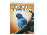 Birthday Card Collection - No. 7 Indian Ringneck Parakeet