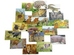 African Savanna - The Kingdom of Lions (Colouring and Sticker Book)