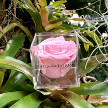 Load image into Gallery viewer, Blush Pink Rose - Forever Rose Gift Box