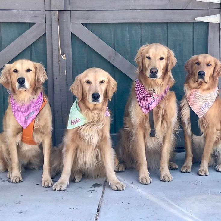Gingham Dog Bandanas
