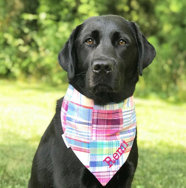 Madras Dog Bandanas in Nantucket Patchwork