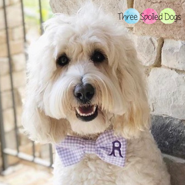 Monogram Dog Bow Ties and Sailor Bows in Gingham
