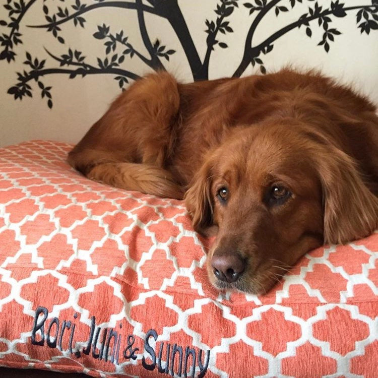 Chenille Quatrefoil Dog Beds