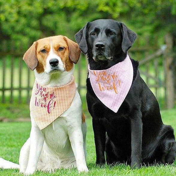 you had me at woof bandana three spoiled dogs