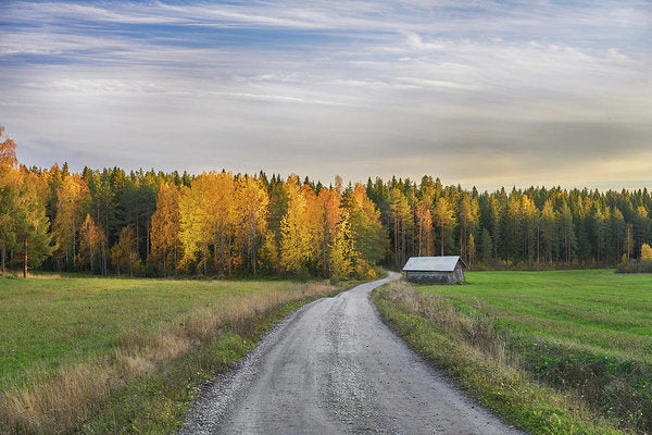 Road To Autumn - Art Print - Saltiola Experience