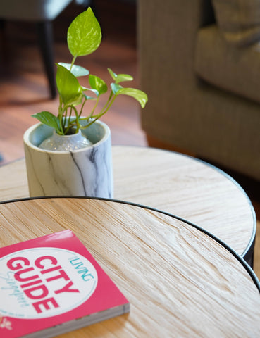Gallery 278 Coffee Table with Singapore City Guide and Potted Plant