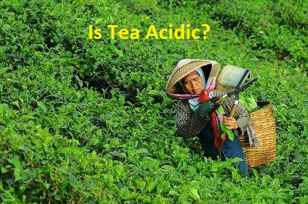Is Your Relishing Favourite Tea Acidic? Let's Find Out