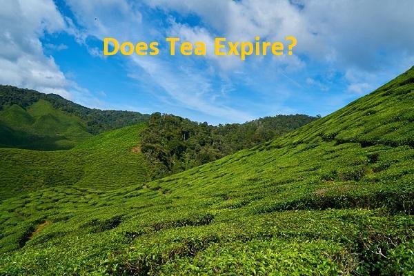 Does Tea Expire? How Long Does Your Tea Live?