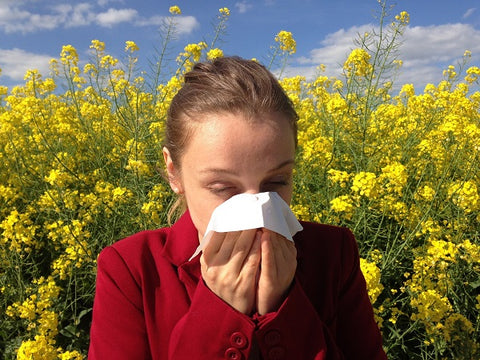 The best tea for allergies: kick out the allergy season