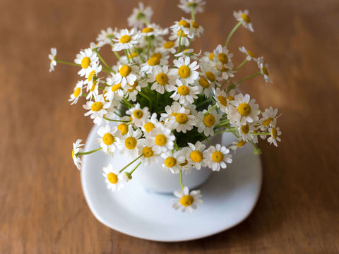 Chamomile flower herbal tea