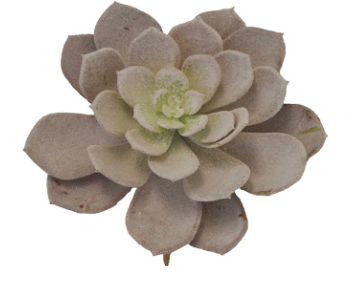 6 IN SUCCULENT PICK