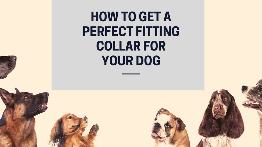 How Tight should a Dog Collar be? - The Perfect Collar Fitting Guide