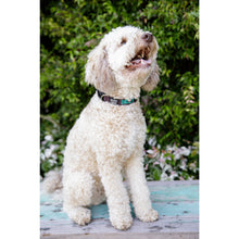 Load image into Gallery viewer, DOG COLLAR Wide Medium - Embroidered