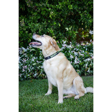 Load image into Gallery viewer, DOG COLLAR Large - Embroidered