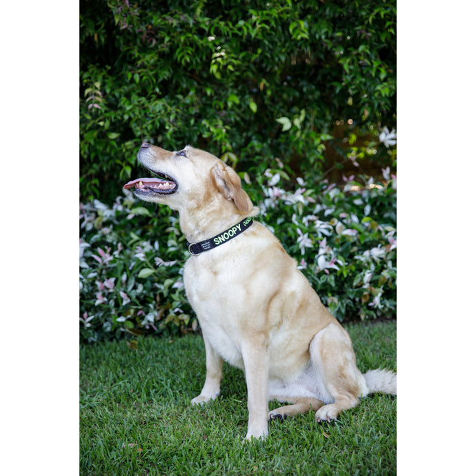 DOG COLLAR Large - Embroidered