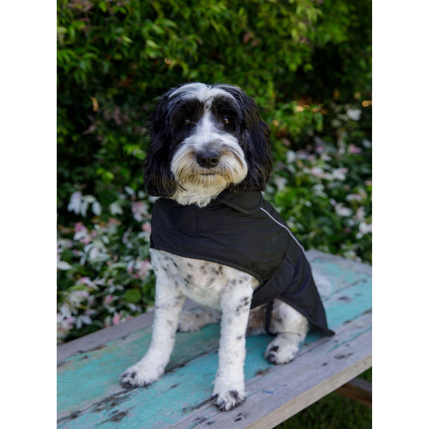 DOG COAT 50CM - Embroidered