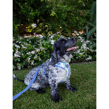 Load image into Gallery viewer, PET HARNESS Floral Blue - Embroidered