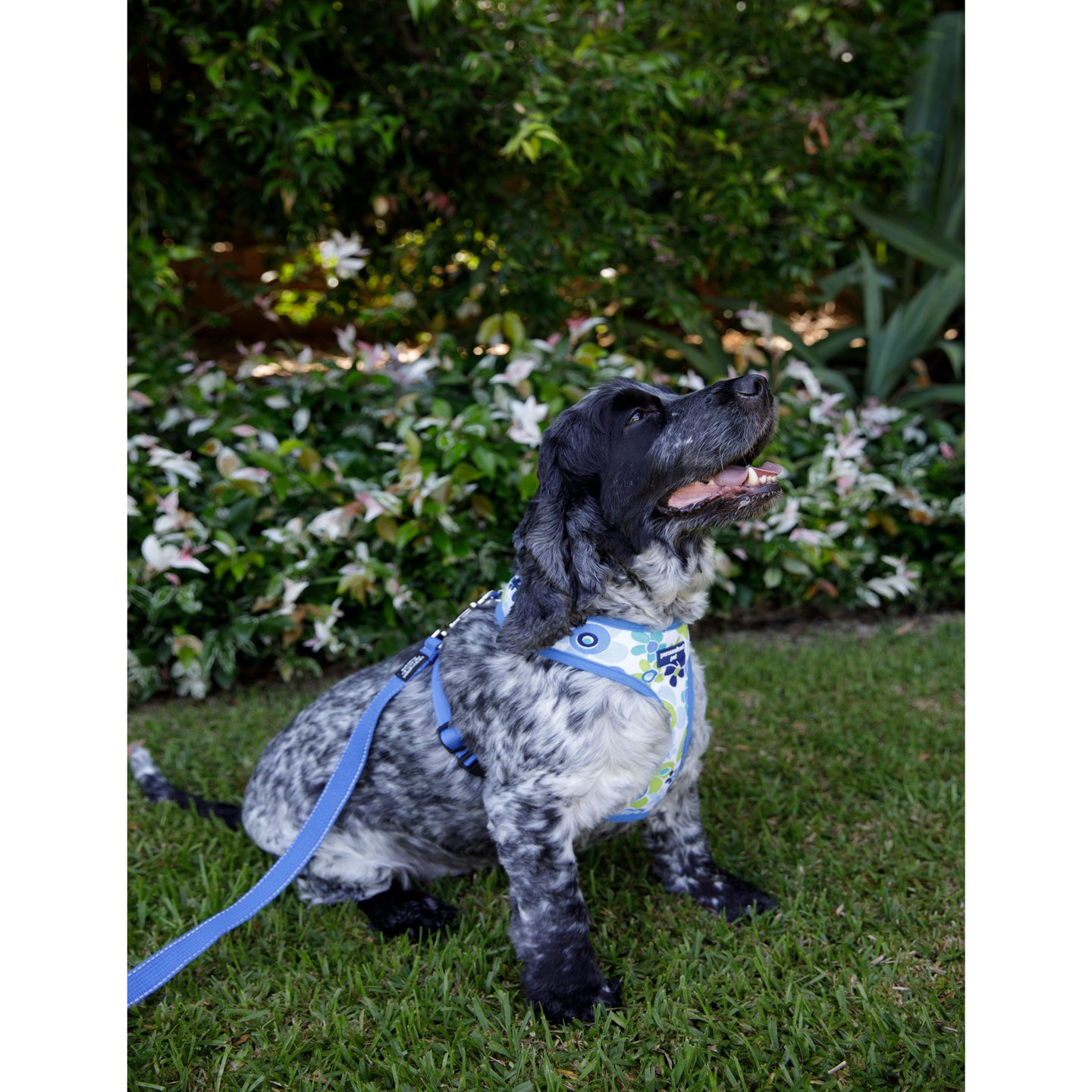 Pet Harness Embroidered - Floral Blue
